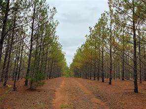 X County Road 2307, Lone Star, TX, 75668