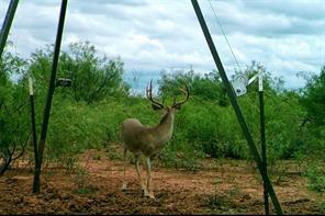 000 Farm to Market 1278, Paducah, TX 79248