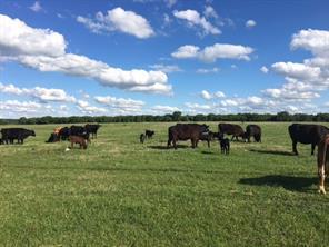TBD Farm Road 3025, Stephenville, TX, 76401