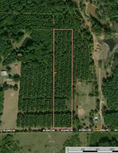 TBD Bluebell Tract 5, Gilmer, TX, 75644