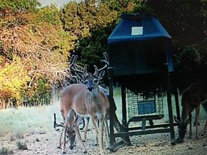 659 County Road 654, Tuscola TX 79562