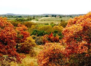 1601 county road 438, de leon, TX 76444
